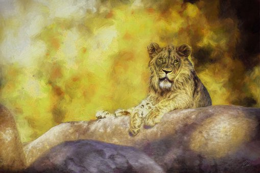Lion, Painting, Zoo, Digital Painting, Photography, Cat