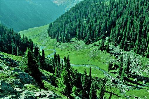 Kumrat, Pakistan, Dir, Valley, Green, Mountains, Tree