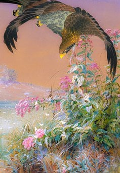 Hawk, Flowers, Bird Of Prey, Predator, Garden, Floral
