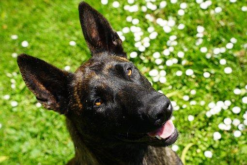 Dog, Cheerful, Fun, Laugh, Happy, Joy, Funny