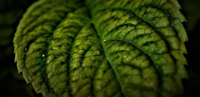 Leaf, Green, Background, Black, Dark