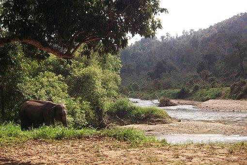 Elephant, Chiang Mai, Thailand, Wildlife, Majestic