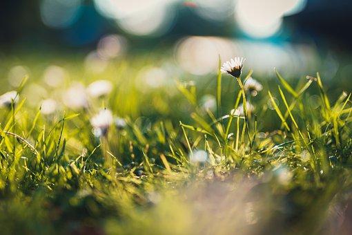 Grass, Meadow, Daisy, Sunlight, Shiny, Nature, Summer