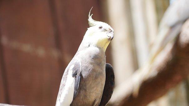 Bird, Thinking, Nature, Animal, Wildlife, Outdoors