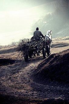 Chariot, Brushwood, Road, Old Man, Man, Old, People