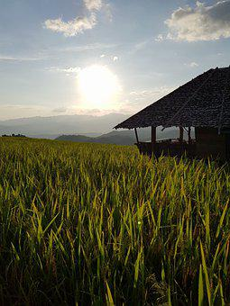 Rice Terraces, Rice, Bong Piang, Mae