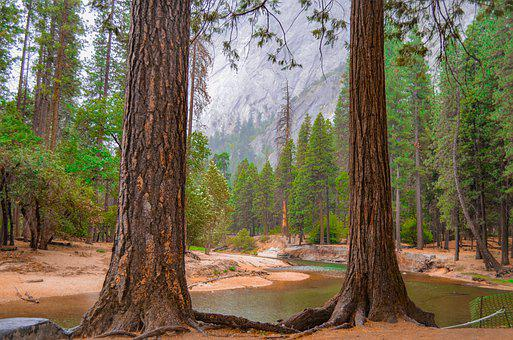 Yosemite, Redwoods, California, Scenic, Trees