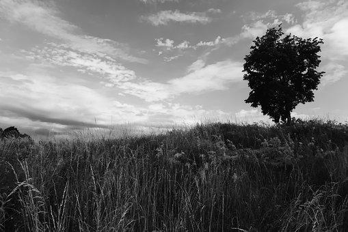 Tree, Meadow, Sky, Clouds, Monochrome, Nature