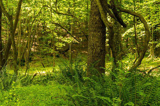 Spring Forest, Daylight Forest