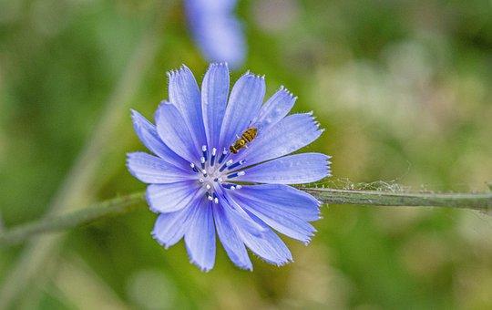 Bee, Flowers, Wild Flowers, Wildflowers