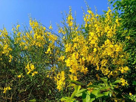 Garden, Flowers, Sky, Blue, Yellow, Spring, Flower