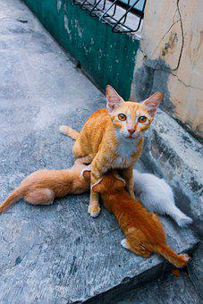 Cat Baby, Cat Orange, Cat Milk, Cat Mother