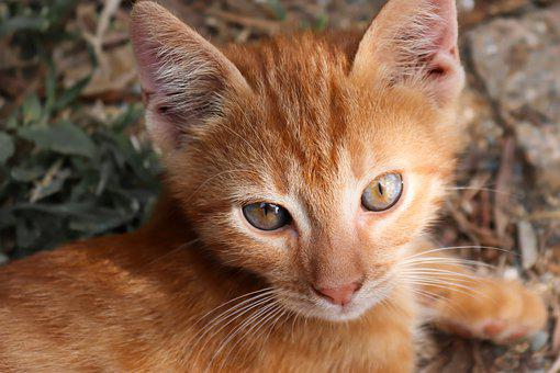 Cat, Small, Red, Kitten, Cute, Charming, Young, Playful