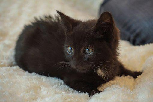 Kitten, Cat Baby, Black, Small, Baby Cat, Cute, Sweet