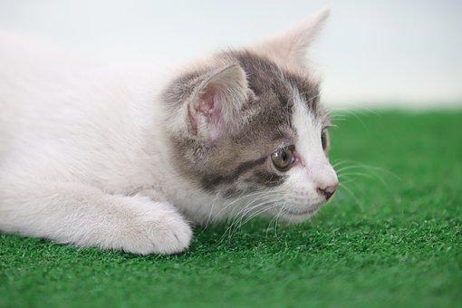 Cat, Kitten, Street Cat, Pets