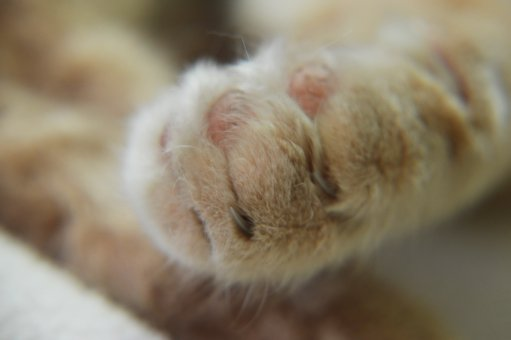 Cat, Paw, Cute, Feline, Domesticated, Young, Fur