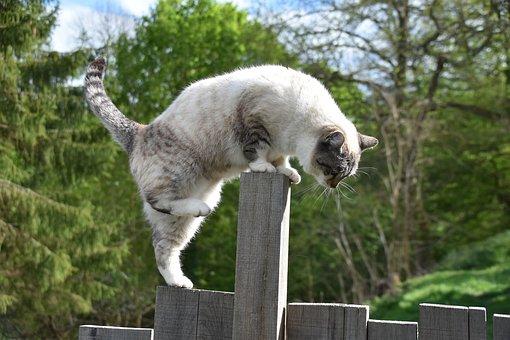 Cat, Pussy, Feline, Cat Walker, Balance, Chat Agile