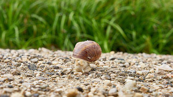 Snail, Closeup, Close Up, Gravel, Path, Grass