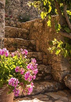 Geraniums, Flowers, Steps, Pink, Stone, Sunshine, Bloom