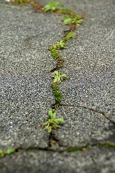 Asphalt, Cracks, Ground, Plant, Courage, Endurance