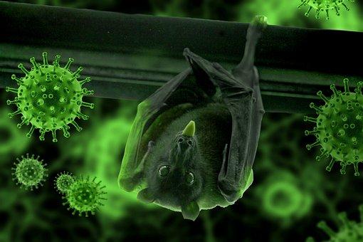 Bat, Hang, Epidemic, Covid19, Coronavirus, Corona