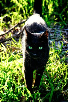 Cat, Black, Green, Animal, Pet, Feline, Predator, Sun