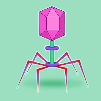 Virus, Bacteriophage, Phage, Bacteria