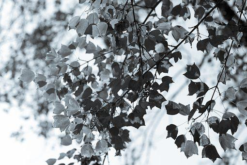 Tree Leaves In Black And White, Winter, B W