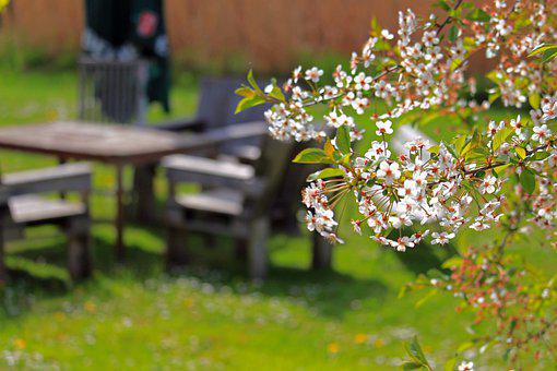 Spring, Cherry Blossoms, Cherry Tree, Garden Furniture