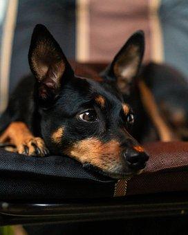 Animal, Dog, Pet, Cute, Portrait, Doggy Style, Charming