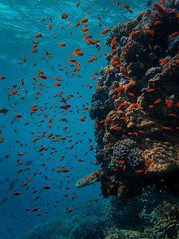 Underwater, Coral, Fish, Sea, Reef, Ocean, Diving