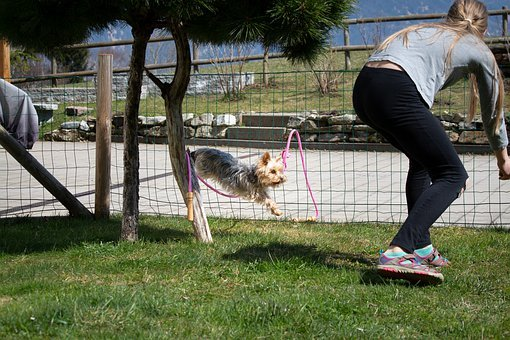 Dog, Dog Training, Play, Fun, Jump, Garden, Child