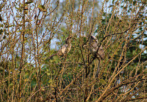 Nature, Hornbill, Bird, Animal, Wildlife, Bill, Plumage