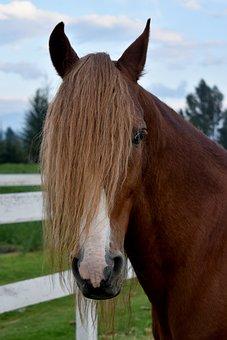 Horses, Hair, Pony, Nature, Brown, Girl, Portrait, Mane