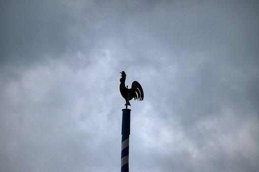 Hahn, Weather Vane, Great, Wind Direction, Metal