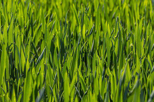 Green, Grass, Ground, Field, Garden, Wall, Small