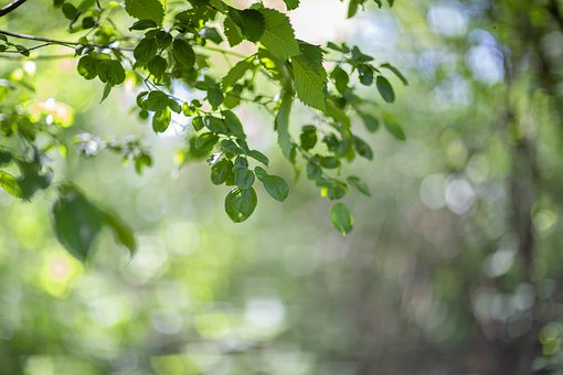 Nature, Green, Outdoor, Bokeh, Forest, Tree, Leaf