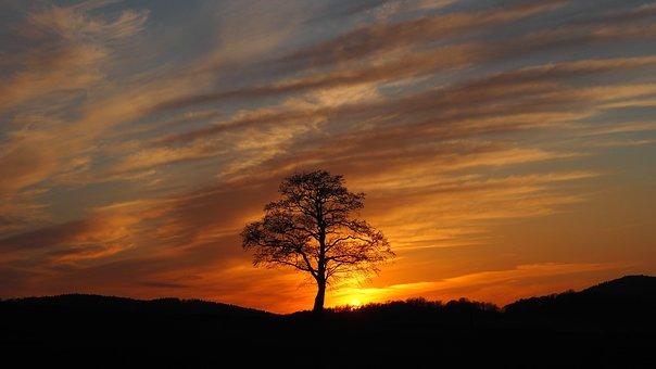 Sunset, Tree, Clouds, Sky, Evening, Nature, Landscape
