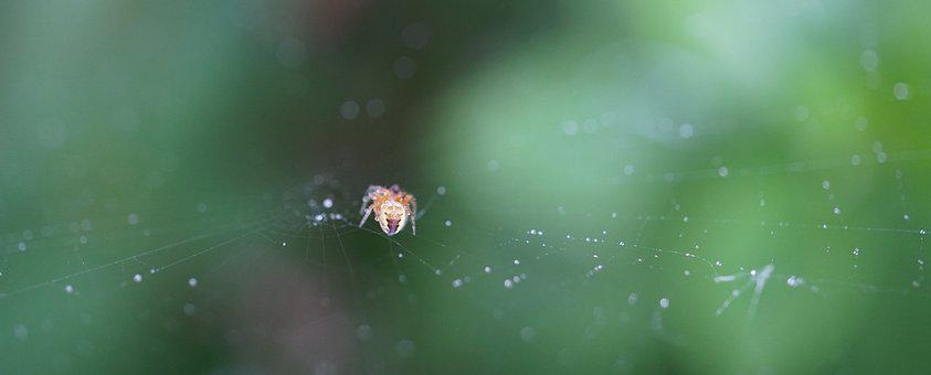 Small Spider, Cobweb, Nature, Small, Animal World