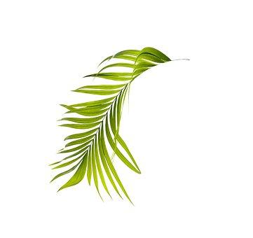 Palm, Leaf, Green, Botany, Tropical, Plant, Summer
