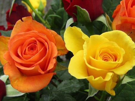 Flowers, Roses, Orange, Yellow, Bouquet, Bouquets
