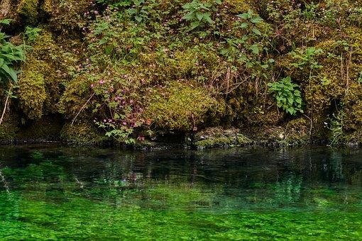 Bach, Nature, River, Landscape, Creek
