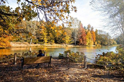 Landscape, Autumn, Fall, Park, Pond