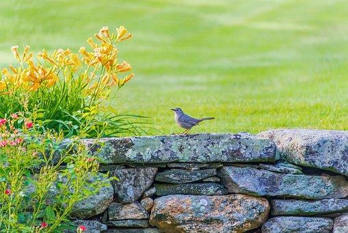 Birds, Flowers, Finch, Stone Wall, Mohan, Nannapaneni