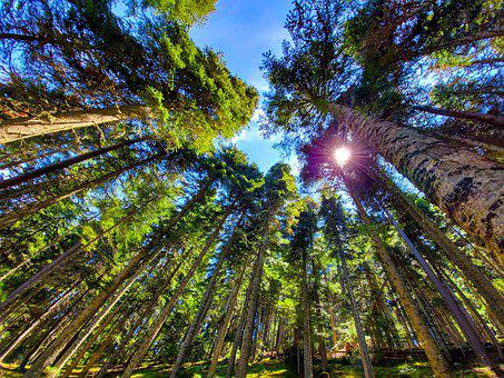 Forest, Sky, Nature, Landscape, Clouds