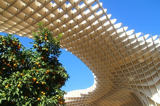 Metropol Parasol, Seville, Orange Tree, Spain