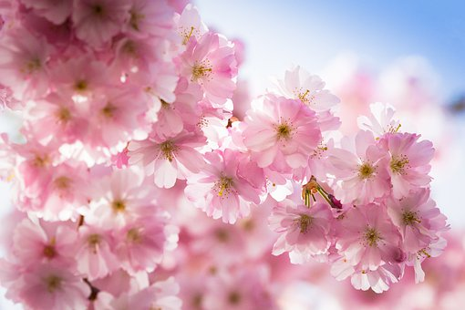Spring, Flowers, Bloom, Nature, Blossom, Colorful