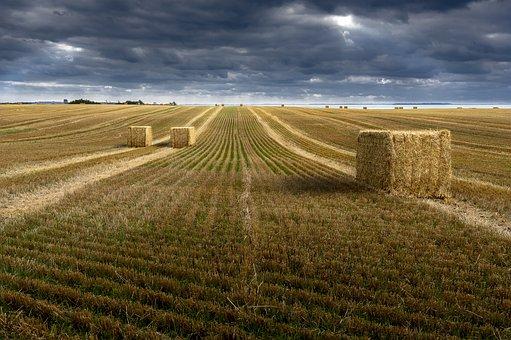 Wheat, Wheatfields, Countryside, Field, Nature