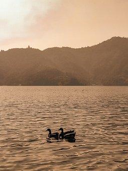 Duck, Water, Lake, Ducklings, Cute, Swim, Chicks, Sky