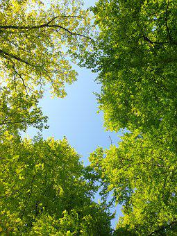 Forest, Spring, Nature, Meditation, Entschleunigung